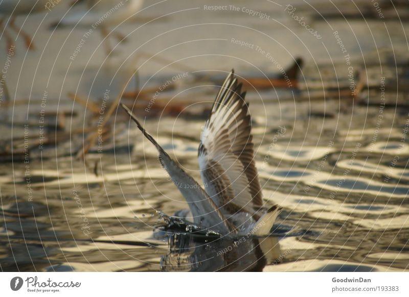 Sanfte Landung Umwelt Natur Wasser Winter Eis Frost Tier Flügel 1 ästhetisch kalt nass Farbfoto Außenaufnahme Tag Schwache Tiefenschärfe