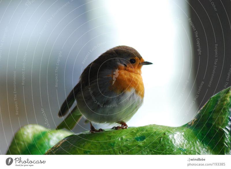 The red bird weiß grün rot ruhig schwarz Tier Leben Freiheit Vogel frei sitzen Sicherheit Fröhlichkeit stehen beobachten Vertrauen