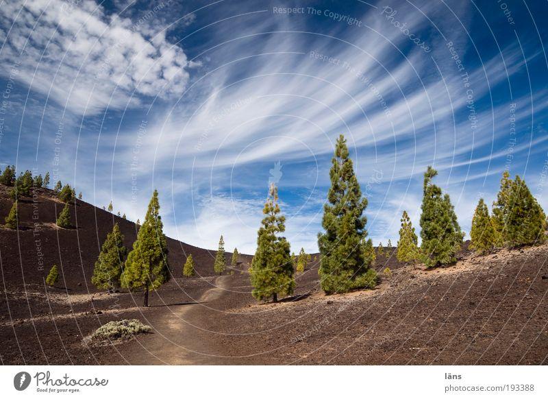 angepasst Natur Himmel Baum Pflanze Berge u. Gebirge Wege & Pfade Landschaft Umwelt Erde außergewöhnlich Urelemente Schönes Wetter Kanaren Vulkan Kiefer Nadelbaum