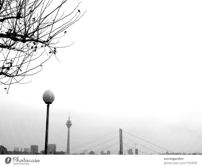 ordnungsliebe. Natur weiß Baum Pflanze Winter kalt Traurigkeit Zufriedenheit Architektur klein Umwelt groß Horizont Perspektive Brücke ästhetisch
