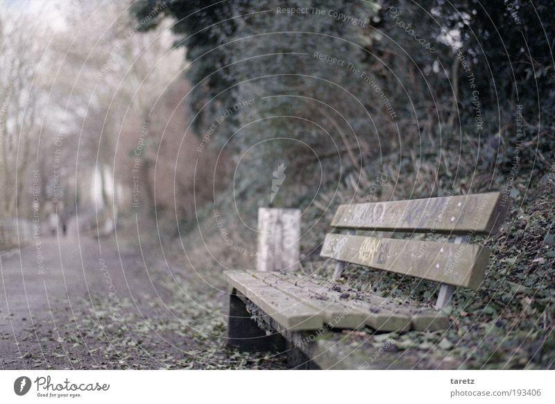 Der Rest ist Schweigen Blatt kalt Herbst grau Wege & Pfade Park Graffiti leer Bank einfach Kunst Müllbehälter Textfreiraum links Parkbank