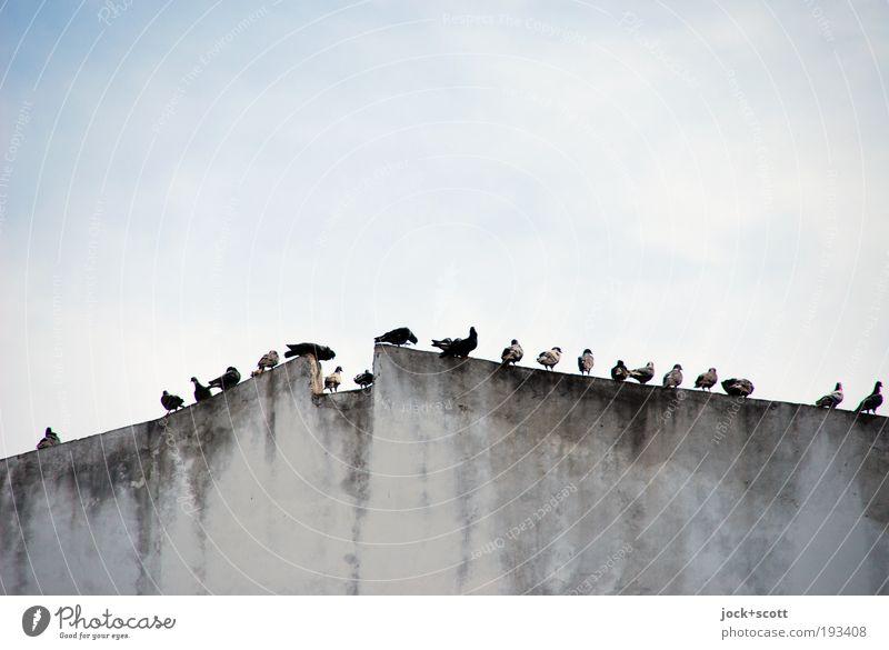 gehemmte Vögelei Himmel Stadt Erholung ruhig Wand natürlich Gebäude Mauer grau oben Vogel Zusammensein dreckig trist sitzen warten