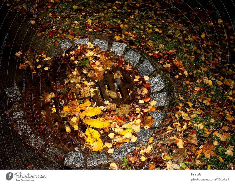 Herbst auf der Straße Blatt Menschenleer Gully rund unten braun mehrfarbig gelb Farbe Vergänglichkeit Wandel & Veränderung Farbfoto Außenaufnahme Nacht
