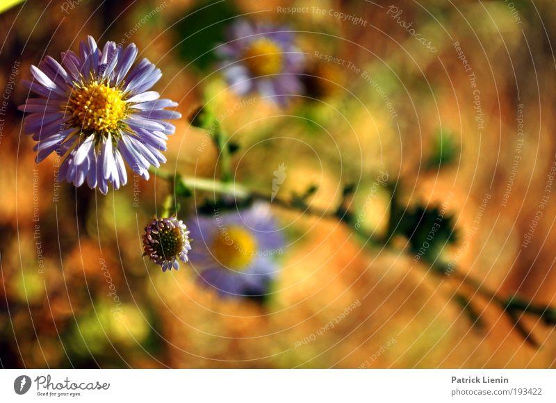 36 Grad Natur weiß Pflanze Sommer Ferien & Urlaub & Reisen Ferne Blüte Frühling Freiheit Wärme Landschaft Wetter elegant Umwelt Erde Ausflug