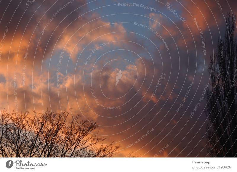 abends Ferne Natur Luft Himmel Wolken Sonnenaufgang Sonnenuntergang Baum atmen leuchten stehen rot Warmherzigkeit Verlässlichkeit Vorsicht Farbe Farbfoto
