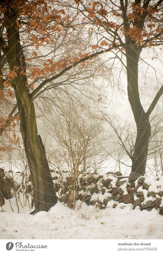 ALTES GEMÄUER Umwelt Natur Landschaft Winter schlechtes Wetter Nebel Eis Frost Schnee Pflanze Baum Sträucher Wiese Feld Wald dunkel kalt schön Endzeitstimmung