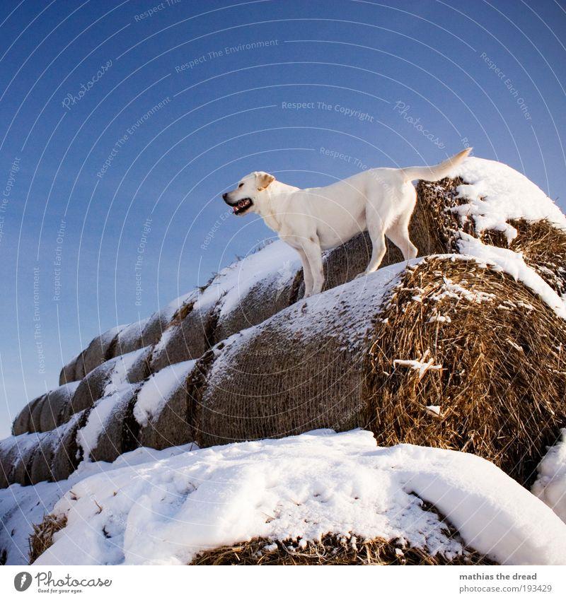 ABENTEUERSPIELPLATZ II Umwelt Natur Wolkenloser Himmel Winter Schönes Wetter Eis Frost Schnee Feld Tier Haustier Hund 1 Blick Spielen stehen warten elegant