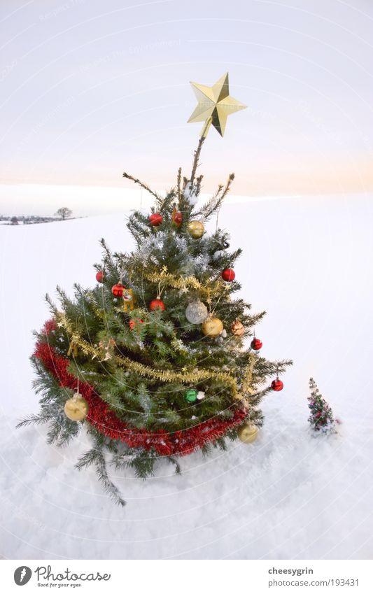 Himmel Weihnachten & Advent weiß Baum Freude Winter Schnee Freundschaft Dekoration & Verzierung groß Ecke Stern Winterurlaub Lametta Sonnenaufgang