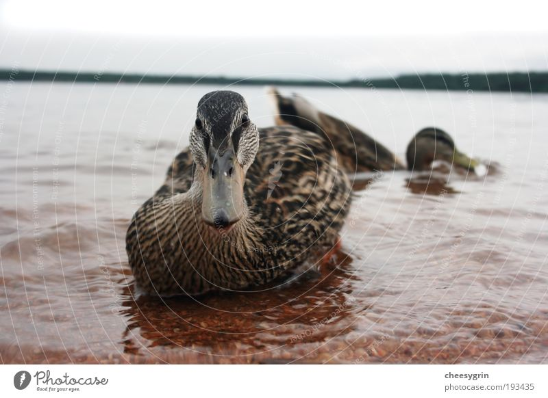 Wasser Strand Tier Umwelt Bewegung Küste See Horizont Vogel Wildtier frisch Ente Umweltschutz Geldscheine friedlich Kieselsteine