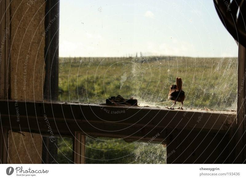 Natur alt grün Einsamkeit Tier Gras Freiheit Holz Vogel Feld Glas Armut Umwelt frei geschlossen