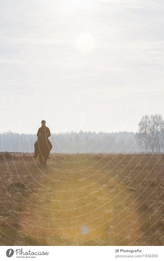 Autumn Vibes Reitsport Pferd Gefühle Stimmung Zufriedenheit Vertrauen Geborgenheit Einigkeit Zusammensein Island Ponys Farbfoto Außenaufnahme Dämmerung