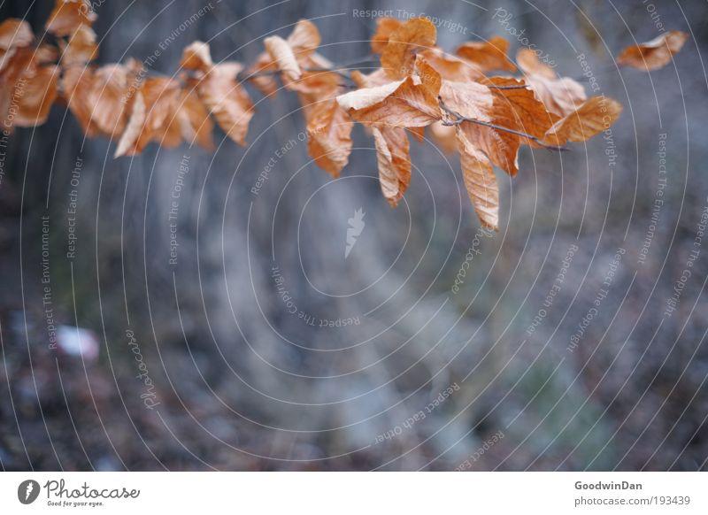 Späte Herbsterscheinung Natur Umwelt dunkel Herbst Park Erde braun Wetter gold Sträucher berühren Duft positiv wählen