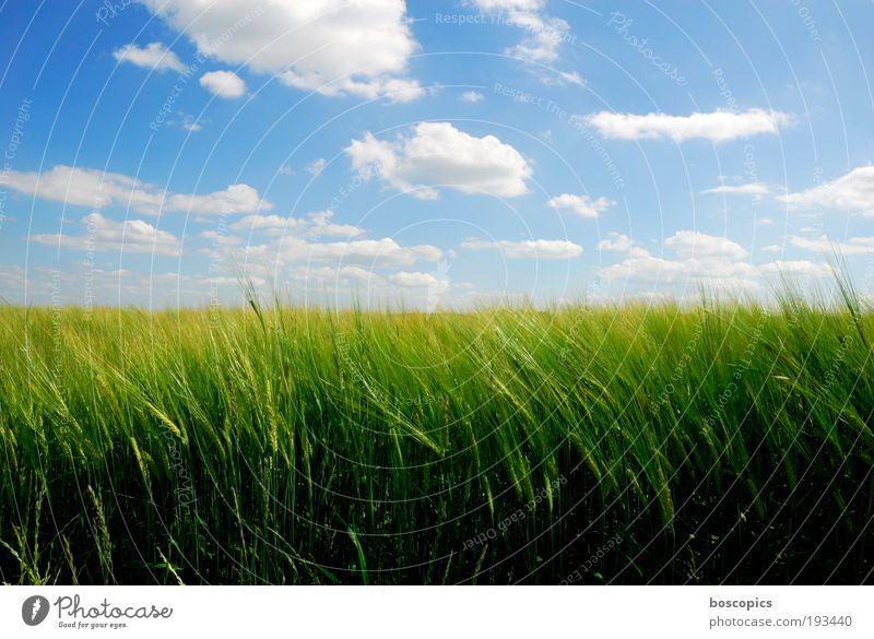 summertime Landschaft Himmel Wolken Sommer Schönes Wetter Nutzpflanze Feld ästhetisch Freundlichkeit blau gelb grün Gerstenfeld Ackerbau friedlich Farbfoto