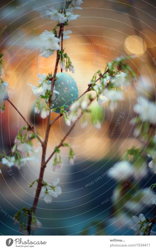 versteckte eiweiße blau Frühling Ostern Blütenknospen verstecken welk bemalt zerbrechlich Osterei Kirschblüten Frühlingsfest