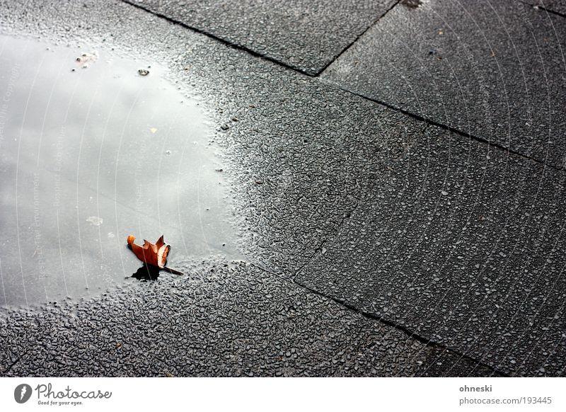 Winterlaub Wasser Blatt Wolken Einsamkeit Straße dunkel Herbst Regen Umwelt Trauer Klima Vergänglichkeit Sehnsucht Müdigkeit Bürgersteig verlieren