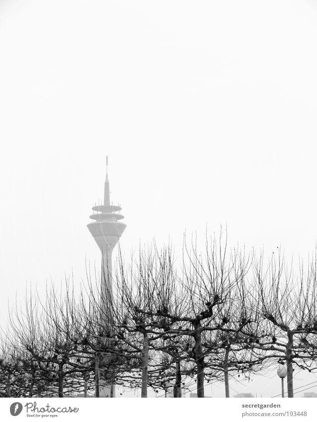 hervorragend. weiß Baum Pflanze Winter Einsamkeit Umwelt Holz Nebel groß ästhetisch Wachstum Turm Macht einzigartig Ast