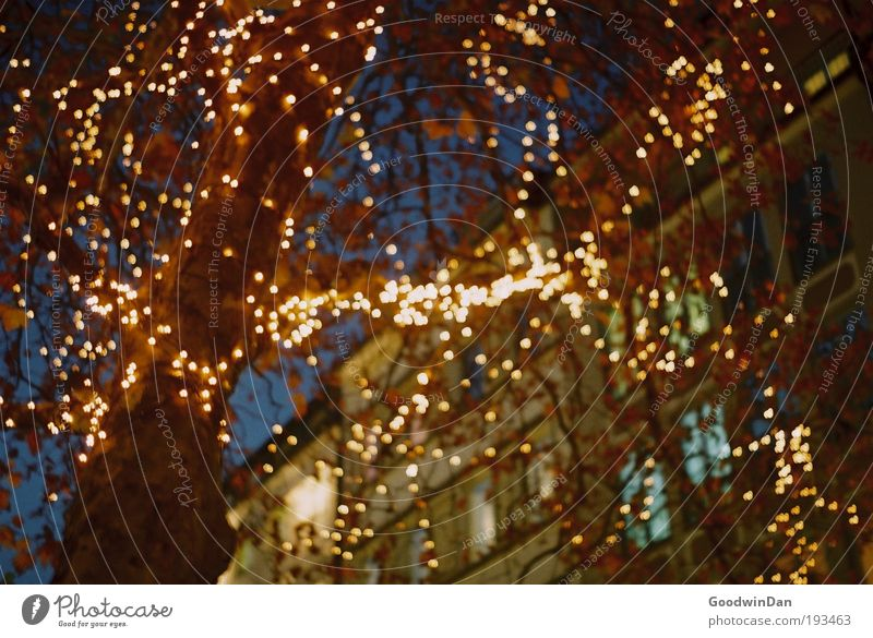 Analoges Wheinachtsleuchten Baum Fußgängerzone Haus Lichterkette hängen Kitsch schön Wärme Glück Farbfoto Außenaufnahme Unschärfe