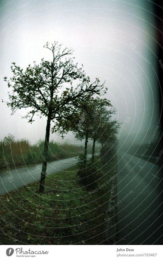 Sleepy Hollow Baum Gras Wege & Pfade Traurigkeit nass Nebel trist Sträucher Vergänglichkeit fantastisch gruselig Verkehrswege mystisch Nebelschleier Nebelstimmung Nebeldecke