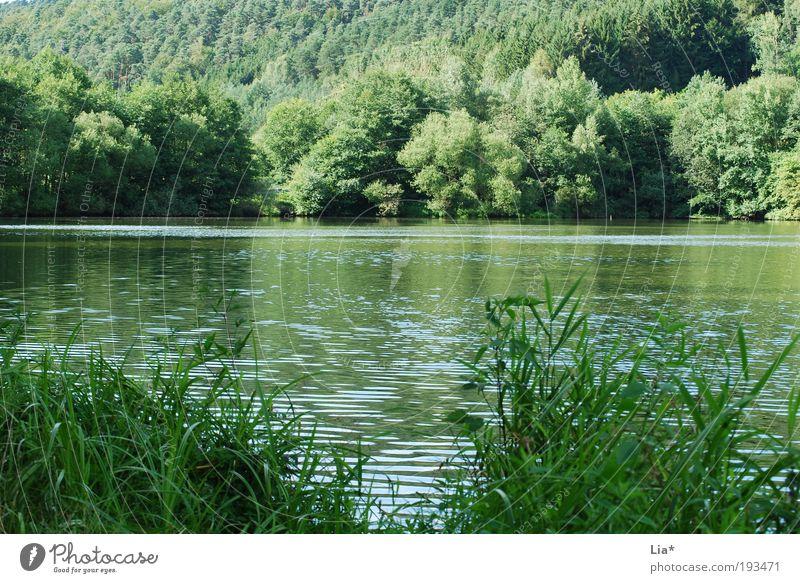 im Grünen Natur Wasser grün Pflanze Sommer ruhig Wald Erholung Umwelt Landschaft Gras See Zufriedenheit Kraft frei Klima