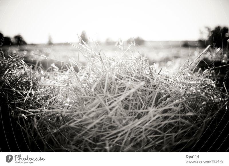 Ein häufchen Elend - ähh Stroh Natur weiß Sonne Pflanze Sommer Ferien & Urlaub & Reisen schwarz Wärme Feld dreckig Armut Umwelt Schwarzweißfoto entdecken Schönes Wetter Dürre