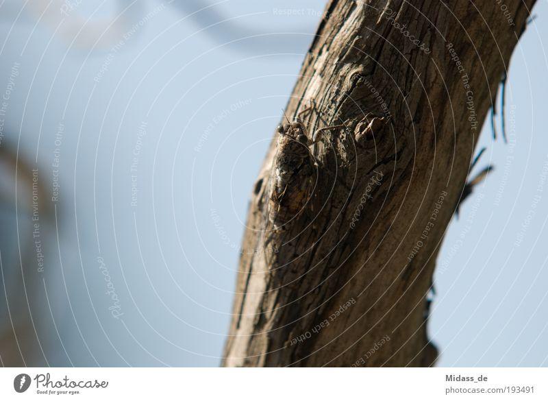 Zikade Natur Baum Pflanze Sonne Sommer Strand Ferien & Urlaub & Reisen Meer Tier Landschaft Umwelt Holz Sand Wärme Ausflug Insel