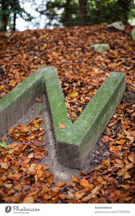 Vermoostes N in Beton Erde Herbst Moos Blatt Wald Denkmal Schriftzeichen alt dunkel historisch natürlich braun grau Buchstaben Anschnitt Farbfoto