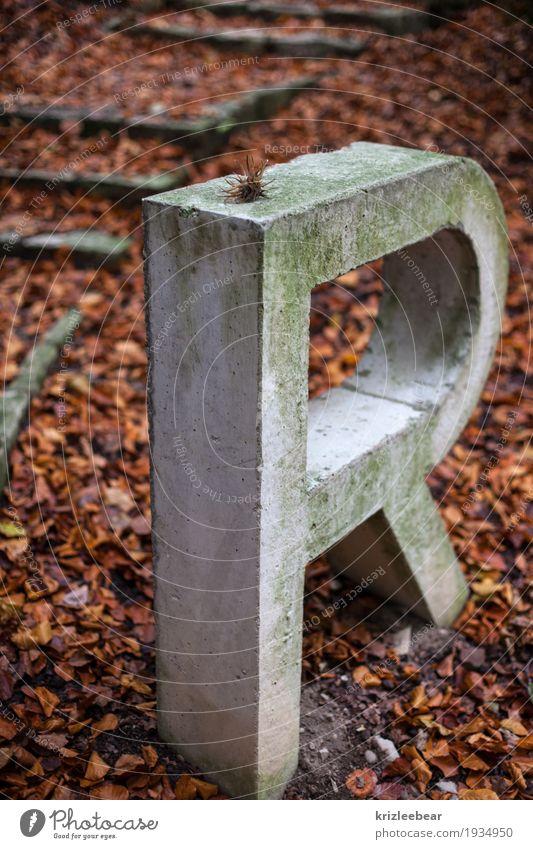 Vermoostes R in Beton Stadt Blatt dunkel Wald Herbst natürlich grau braun Erde Schriftzeichen historisch Buchstaben stark Denkmal Moos