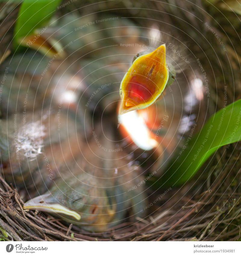 Der frühe Vogel Natur Tier Tierjunges Essen Frühling Freundschaft Wildtier Tiergruppe Warmherzigkeit niedlich Sicherheit Schutz Vertrauen schreien Vorfreude