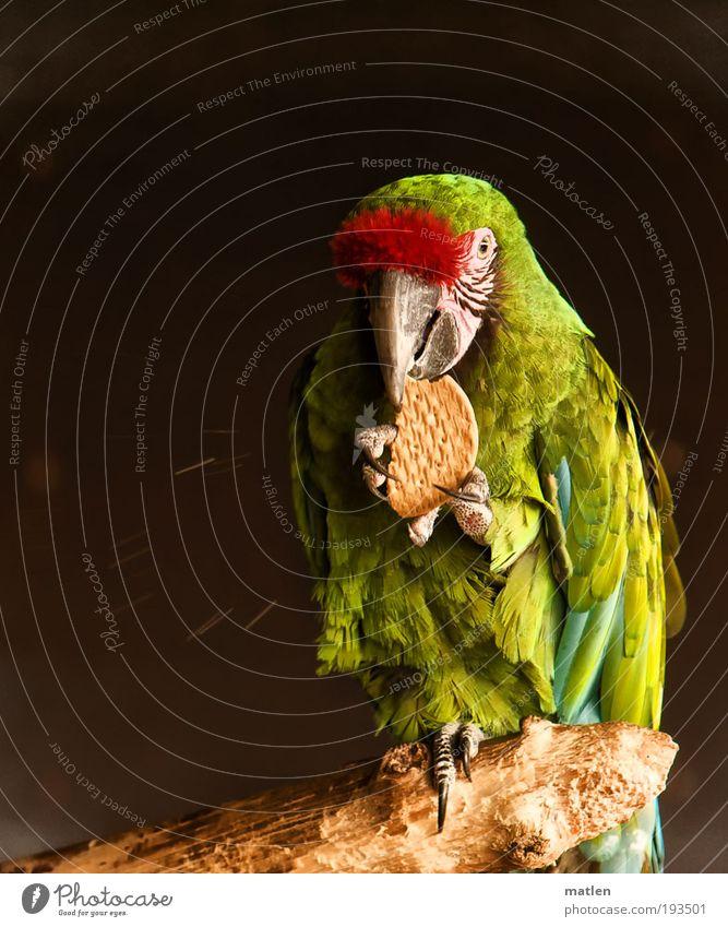 Krümelmonster grün rot Ernährung Tier Holz Vogel exotisch Keks Lebensmittel Textfreiraum links verschwenden