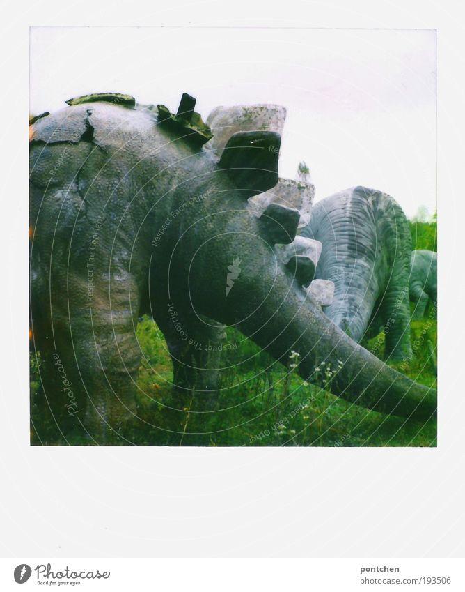 Polaroid zeigt Hinterteile von Dinosaurierfiguren in einem geschlossenen Freizeitpark. Pleite Freizeit & Hobby Vergnügungspark Himmel Blume Gras Wiese Tier