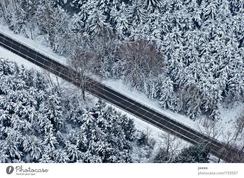 Raumteiler Natur Baum Winter ruhig Wald Straße Schnee oben Eis Angst Frost unten Verkehrswege entdecken Schneelandschaft Nadelwald