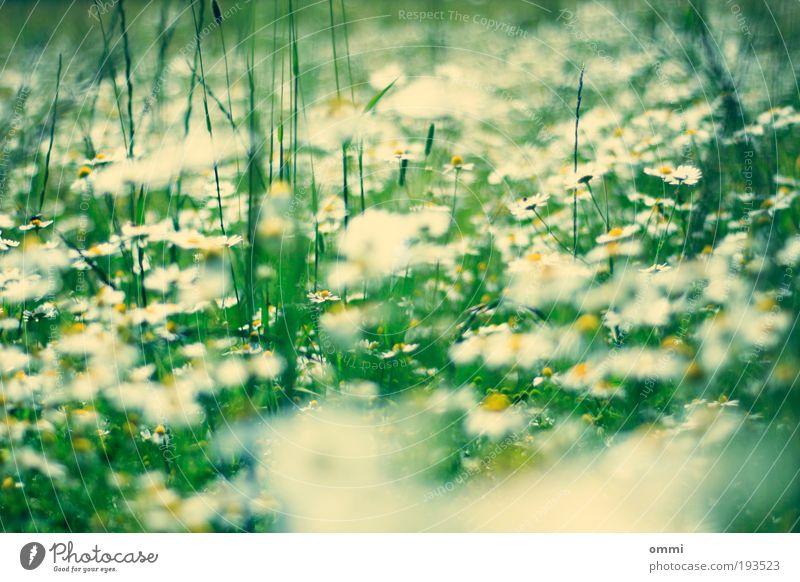 Beblumter Grünstreifen Natur schön weiß Blume grün Pflanze Sommer gelb Blüte Gras Frühling Glück Feld Umwelt frei frisch