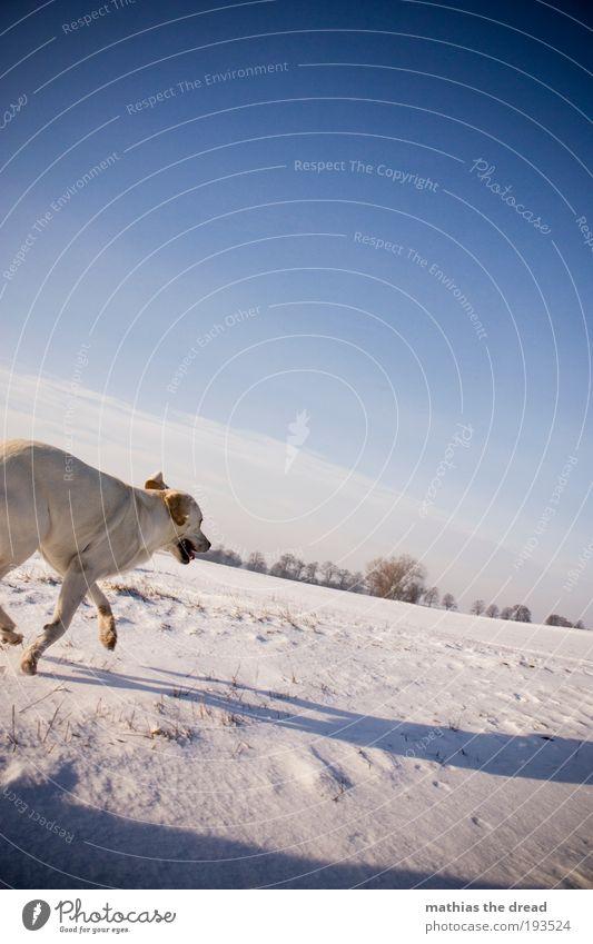 WALKING Natur schön Himmel Baum Pflanze Winter Wolken Tier kalt Schnee Wiese springen Bewegung Hund Landschaft Eis