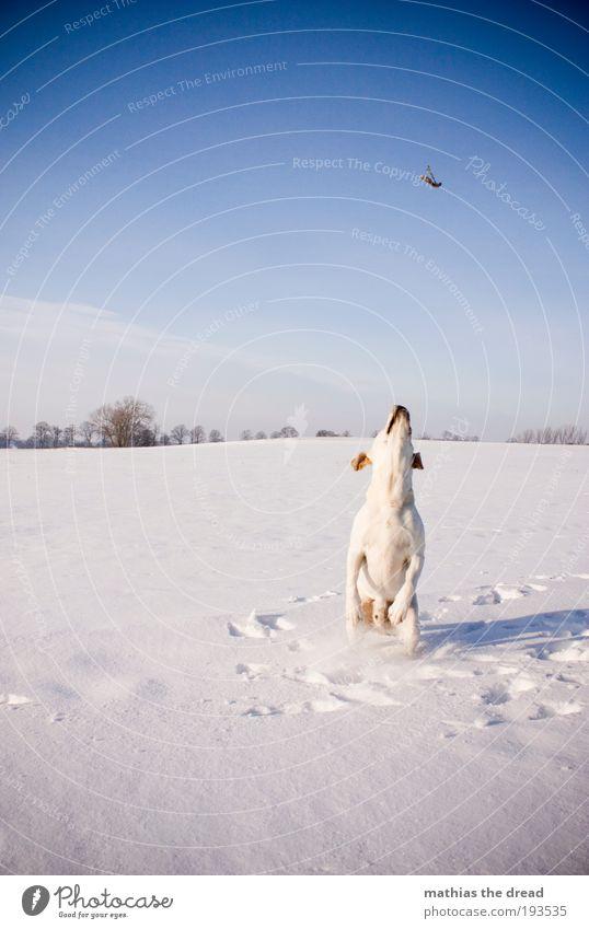 READY TO TAKE OFF Natur weiß Baum Hund Pflanze Winter Blume Tier kalt Wiese Schnee Umwelt Landschaft Spielen springen Eis