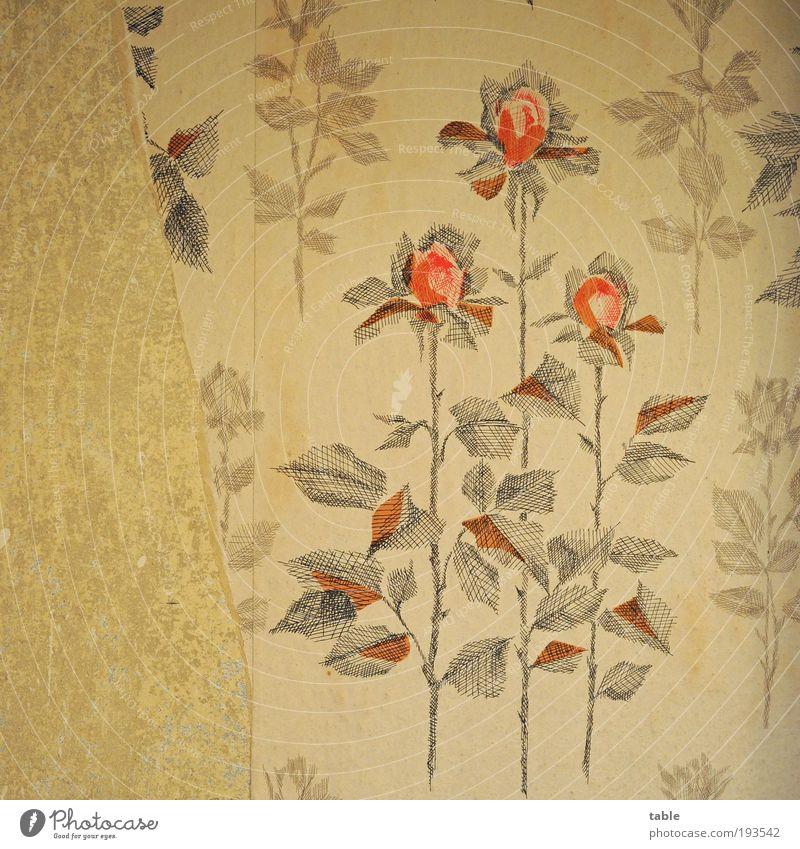 bei Oma und Opa . . . alt Blume rot Wand Gefühle Stil grau Stein Mauer braun Wohnung Design Lifestyle Rose ästhetisch Wandel & Veränderung
