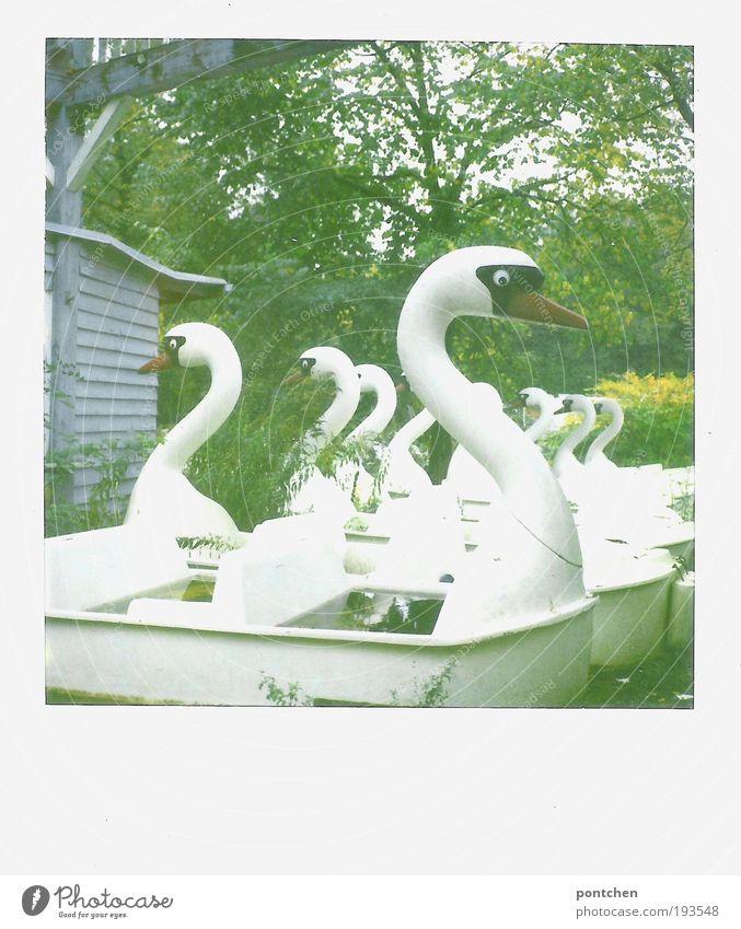 Alte Tretboote in Form von Schwänen stehen aufgereiht in der Wiese. Verlassener Freizeitpark. Pleite, Niedergang Freizeit & Hobby Vergnügungspark Natur Pflanze