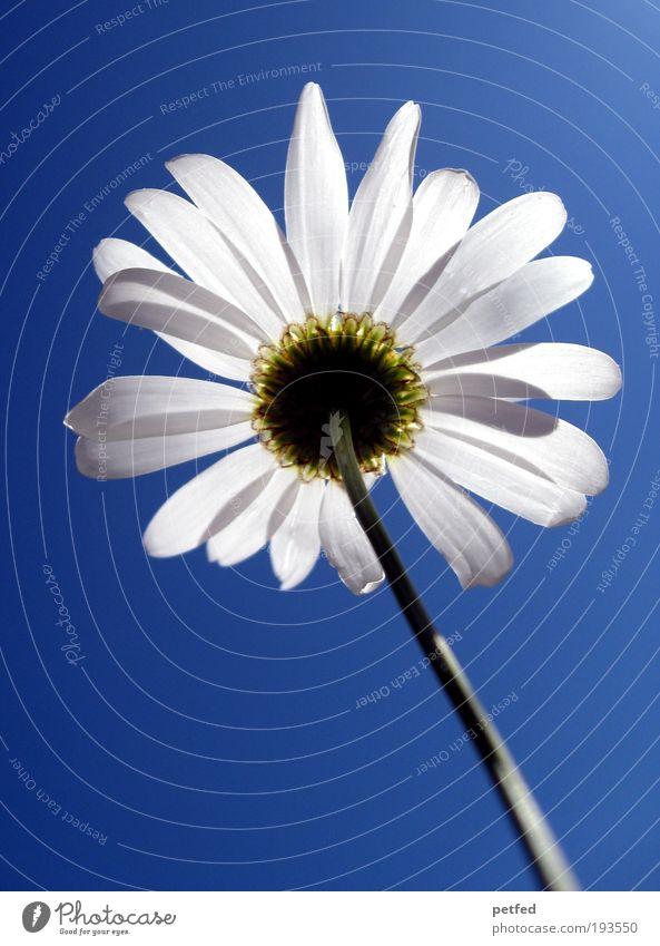 Hoffnung Pflanze Himmel Sonnenlicht Frühling Sommer Schönes Wetter Blume Blatt Blüte hell schön Wärme weich blau weiß Umwelt Wachstum Farbfoto Außenaufnahme