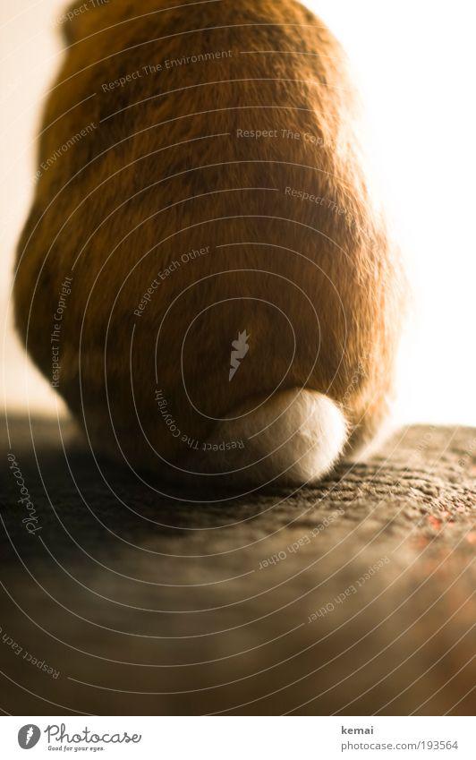 ... kann auch entzücken Tier Haustier Fell Hase & Kaninchen zwerghase Zwergkaninchen Blume Nagetiere 1 Hinterteil Stummelschwanz Schwanz Teppich Lampe leuchten
