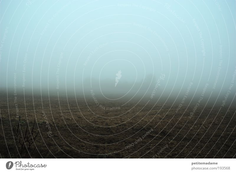 Nebel Himmel ruhig kalt Herbst träumen Traurigkeit Landschaft Stimmung Feld Angst Wetter Umwelt Horizont Erde Sehnsucht
