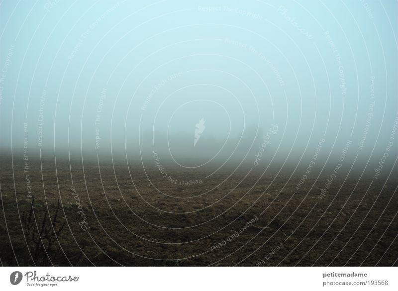 Nebel Landschaft Erde Himmel Herbst Wetter schlechtes Wetter Feld Stimmung ruhig träumen Traurigkeit Sorge Sehnsucht Heimweh Angst geheimnisvoll kalt Umwelt