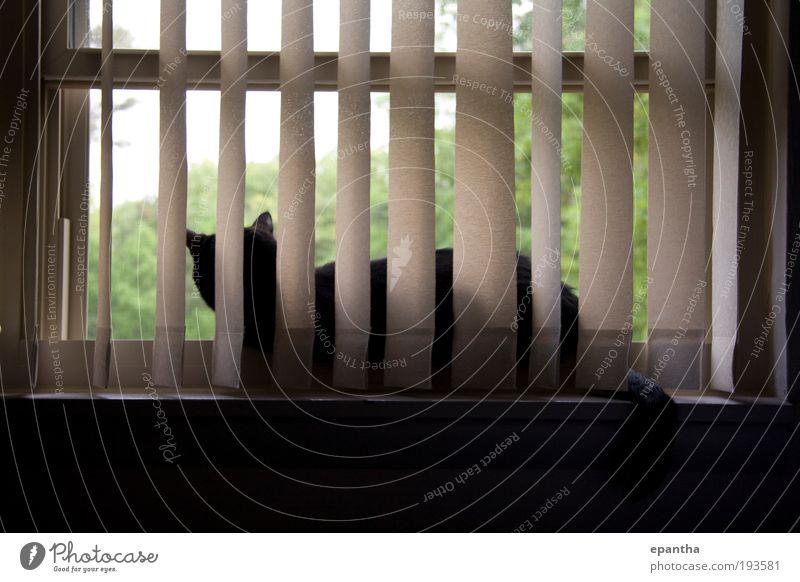 ruhig schwarz Tier Erholung Katze Zufriedenheit braun Raum sitzen Coolness liegen Häusliches Leben Gelassenheit Neugier Wachsamkeit