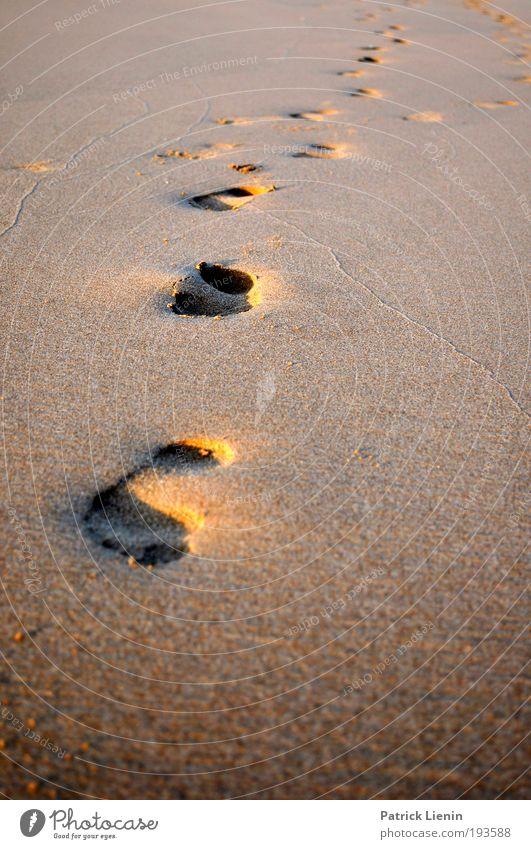 unterwegs Sommer Strand Meer Ferien & Urlaub & Reisen ruhig Ferne Erholung Freiheit Sand Zufriedenheit gold Wellness entdecken Fußspur Kurve Spuren