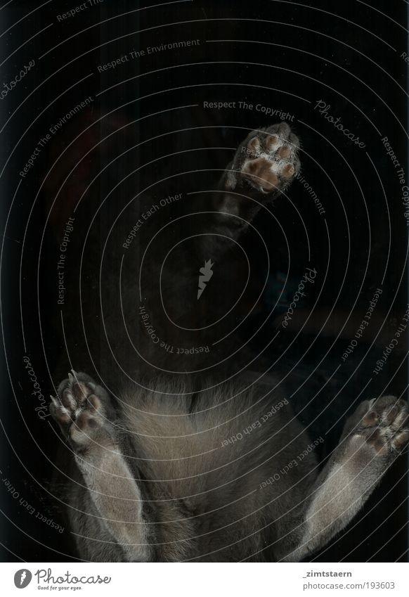 Miau auf dem Scanner schwarz Tier grau Katze elegant ästhetisch stehen nah authentisch unten bizarr Haustier Printmedien kuschlig Experiment