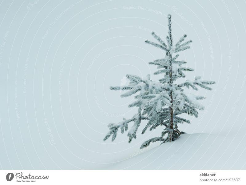 Baum rechts Umwelt Natur Landschaft Pflanze Urelemente Luft Wasser Winter Klima Klimawandel schlechtes Wetter Eis Frost Schnee Park Coolness hell kalt weiß