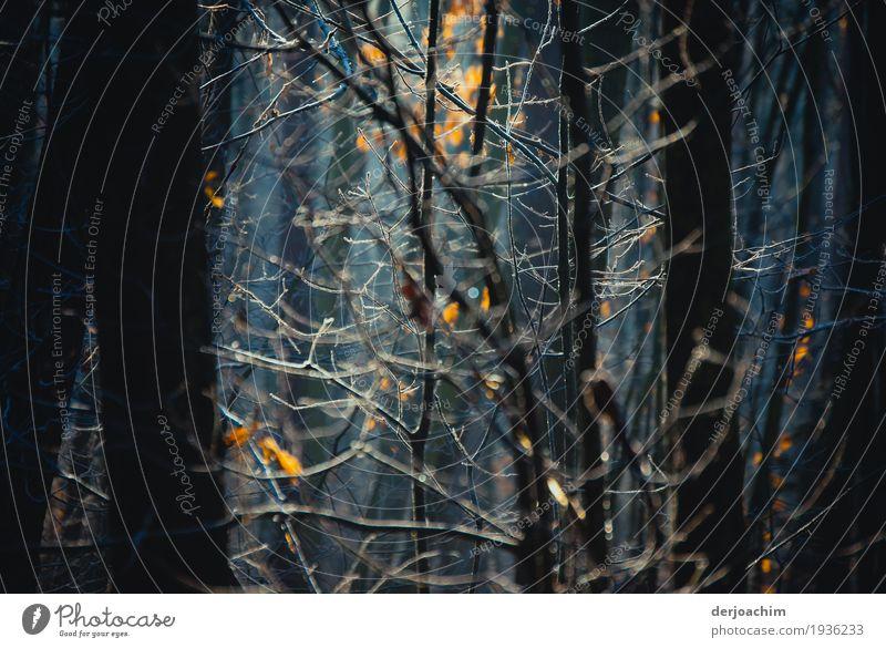 Stille im Wald. Die Sonne scheint durch die Bäume und Zweigen. Freude Erholung ruhig wandern Natur Herbst Schönes Wetter Baum Bayern Deutschland Menschenleer