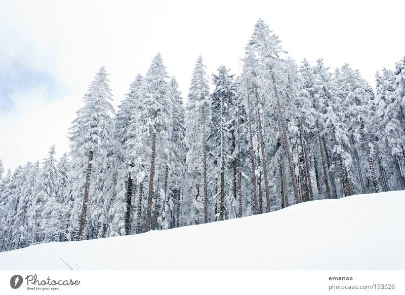 weisswald Ferien & Urlaub & Reisen Ausflug Winter Schnee Winterurlaub Berge u. Gebirge Skier Skipiste Natur Landschaft Baum Alpen Erholung Idylle ruhig