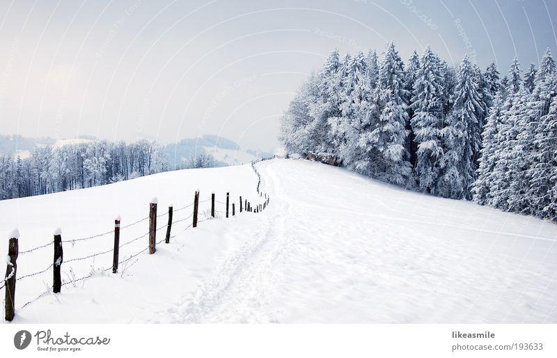 Winterwonderland Natur Landschaft Pflanze Himmel Wolken Eis Frost Schnee Baum Wiese Wald Hügel Stimmung Erde Zaun Wege & Pfade Winterurlaub Farbfoto