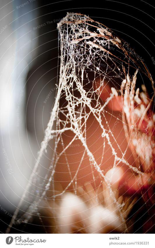 Kokon Umwelt Natur Pflanze Sträucher Halm Spinnennetz Spinngewebe dehydrieren dünn klein nah trocken geduldig ruhig Rätsel Vergänglichkeit verlieren