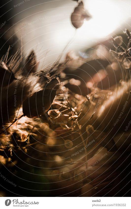 Stillleben in Sepia Umwelt Pflanze Herbst Sträucher Blatt Zierpflanze Halm Stengel dehydrieren dünn klein nah trocken ruhig Hoffnung demütig Traurigkeit Sorge
