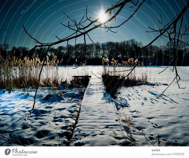 Land unter Umwelt Natur Landschaft Pflanze Wolkenloser Himmel Horizont Winter Klima Schönes Wetter Eis Frost Schnee Baum Sträucher Röhricht Zweige u. Äste Wald